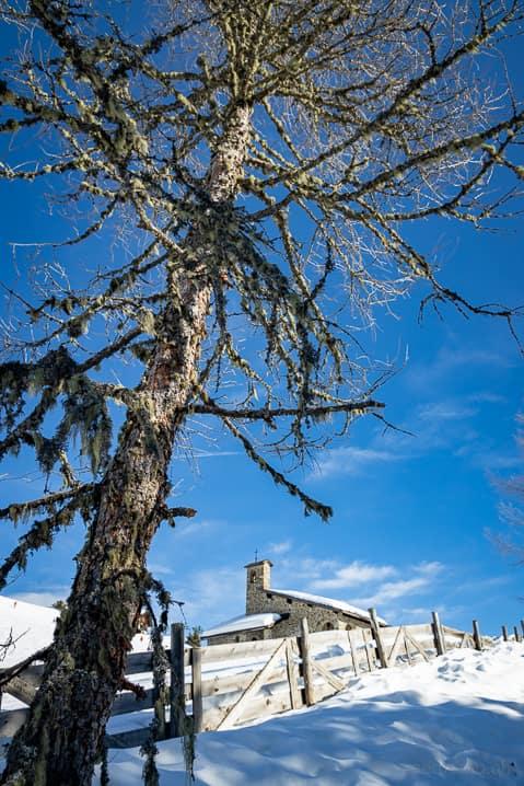 Bergkapelle Kreuztal hinter einer Tanne im Winter
