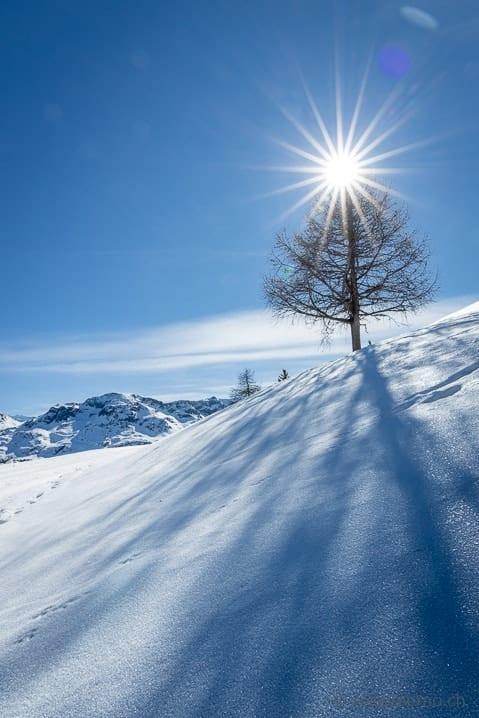 Baum und Schatten im Gegenlicht