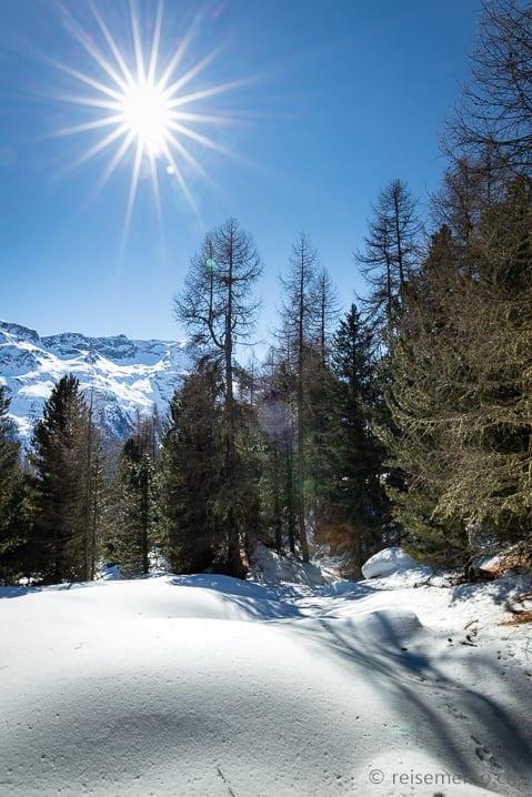 Wald der Winterwanderung oberhalb von Chantarella