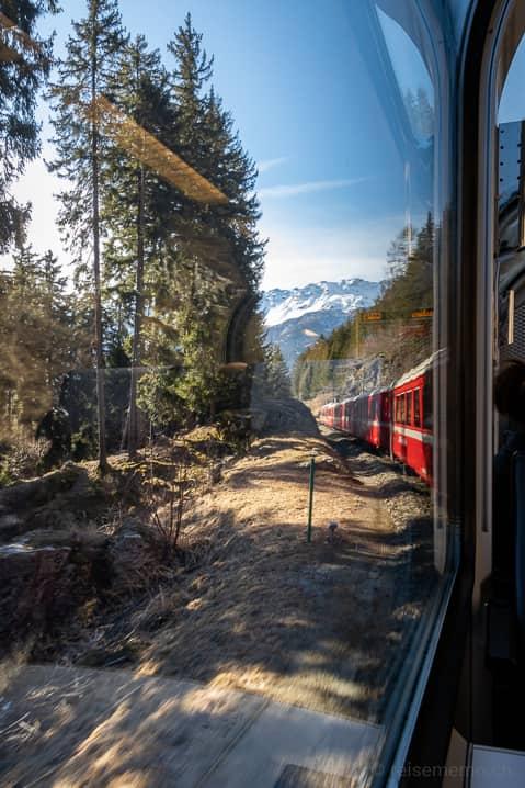 Bernina Express: Fahrt durch den Pinienwald im Puschlav