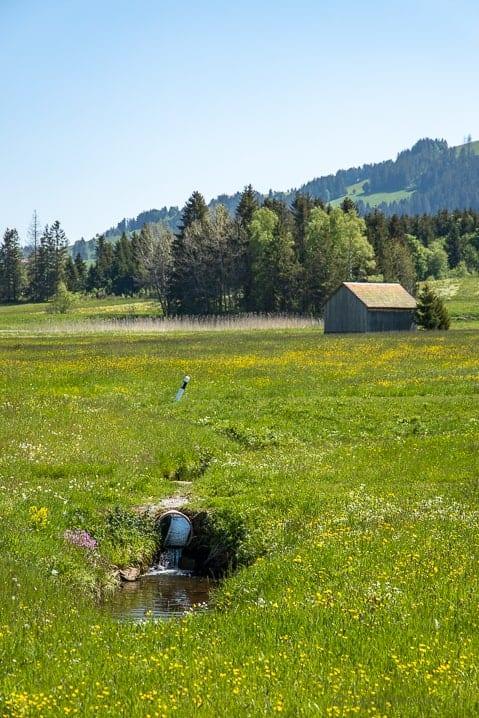 Biber Bach durch das Hochmoor von Rothenthurm