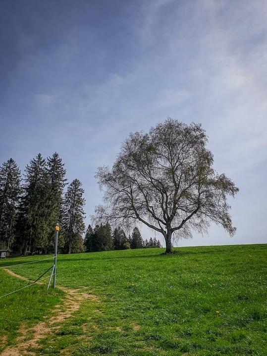 Wanderweg von Büel in Richtung Etzel