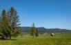 Reisememo Wanderung im Hochmoor von Rothenthurm
