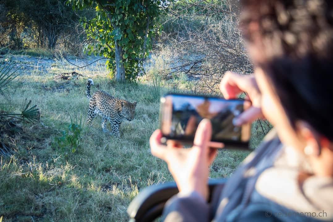 Katja auf Okavangodelta-Safari mit Leopardensichtung