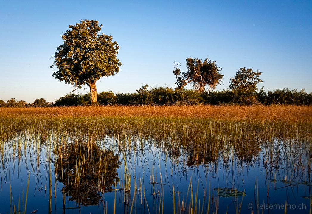 Mokoro-Fahrt: Bäume spiegeln sich im Okavango Delta