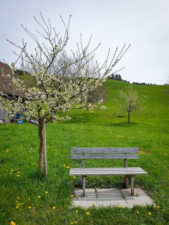 Sitzbank bei Büel
