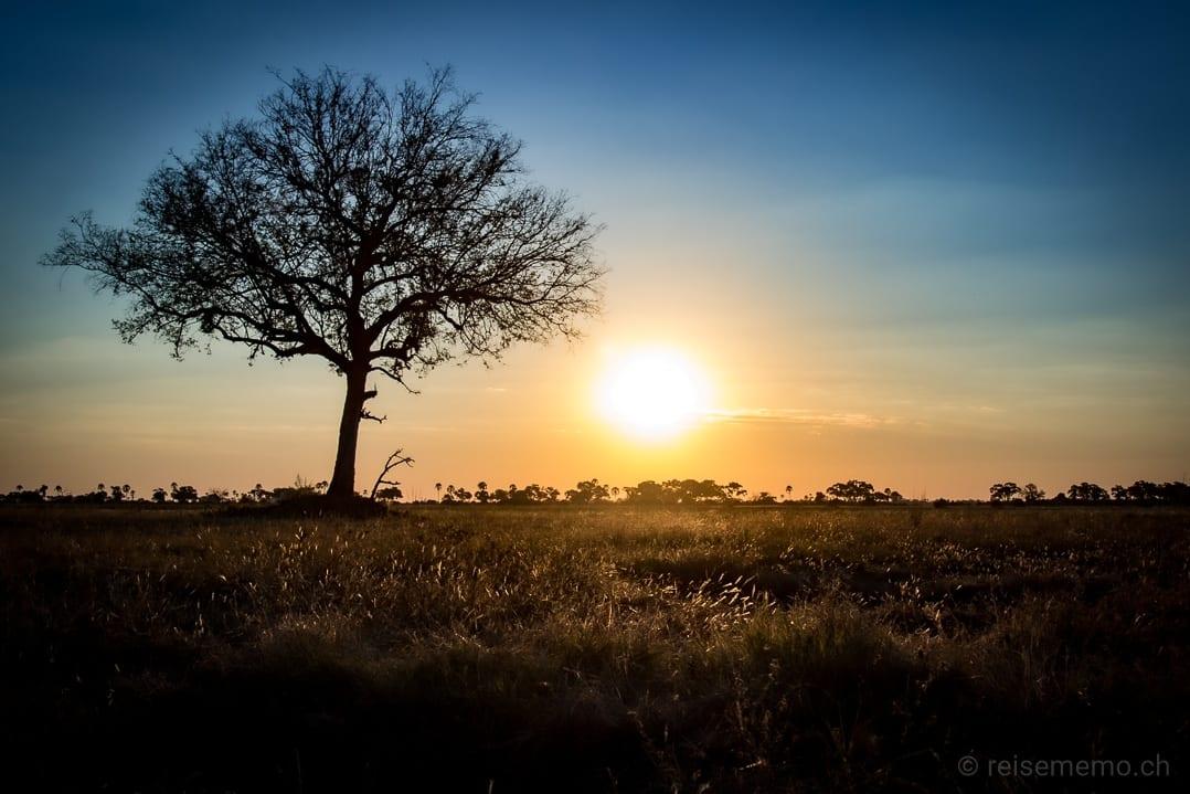 Sonnenuntergang über dem Okavangodelta des Little Mombo Camps in Botswana