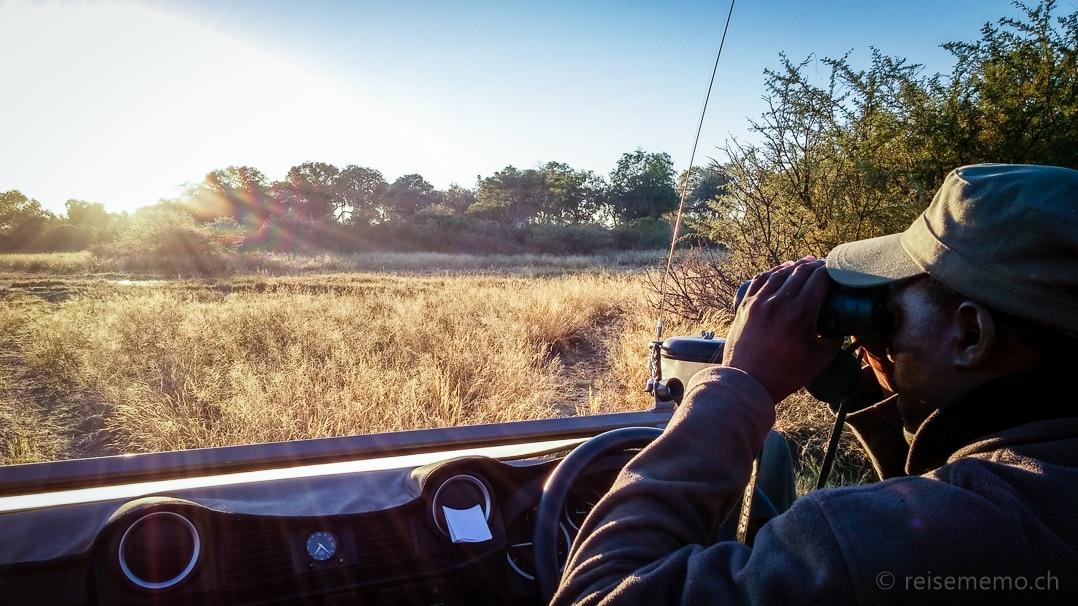 Guide Kambango hält Ausschau auf der Safari