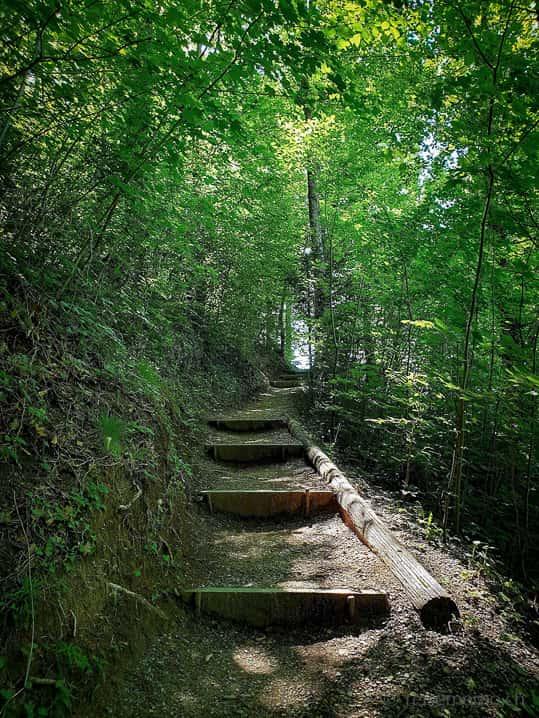 Wanderung im Waldstück beim Risitobel