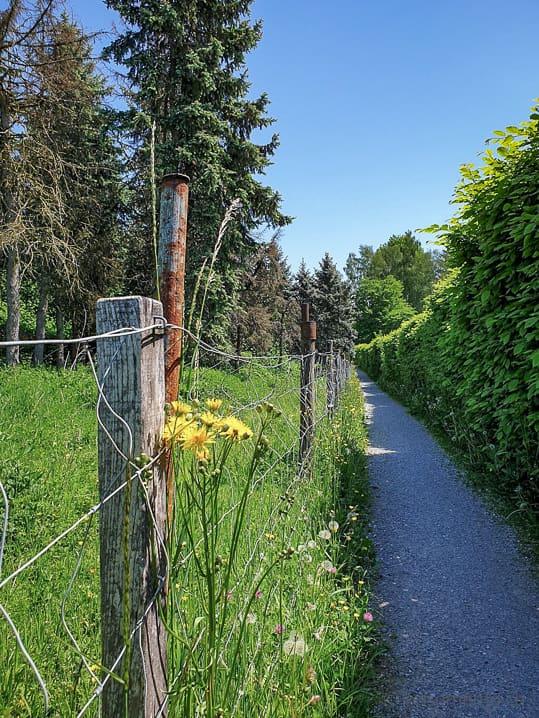Weg zum Stigelenweiher