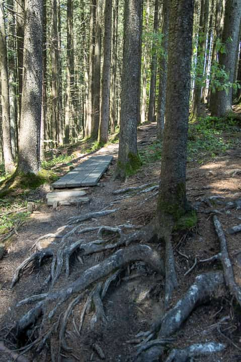 Hochmoor-Wanderweg durch den Wald