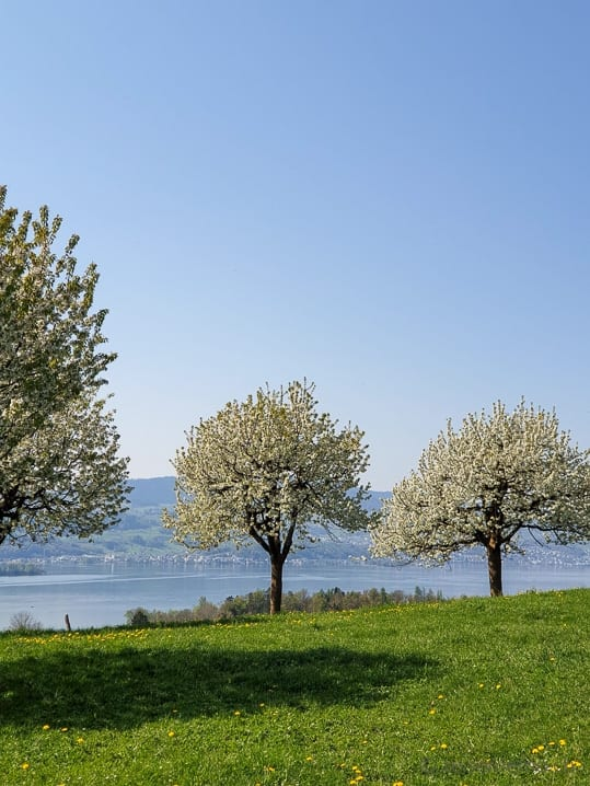 Aussicht auf den Zürichsee