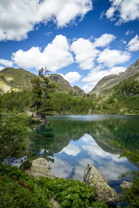 Tanne am Lago di Val Viola