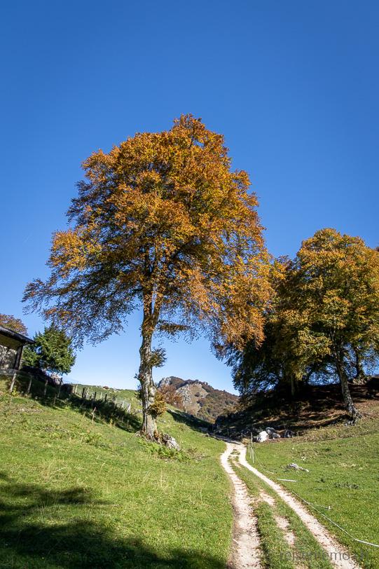 Wanderweg nach Alpe Bolla