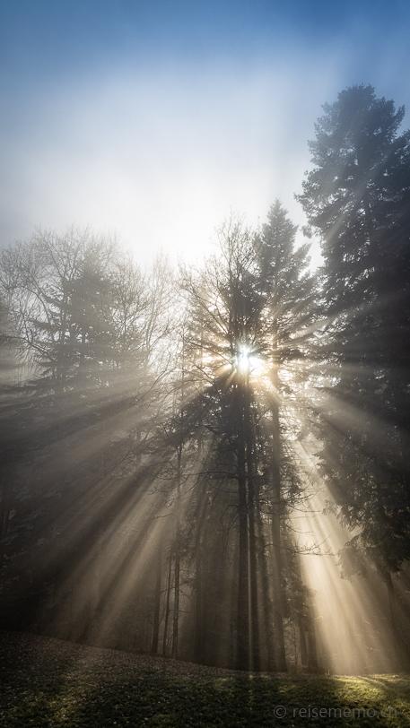 Brechendes Sonnenlicht im Morgennebel