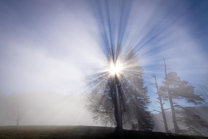 Lichtbrechung im Morgennebel