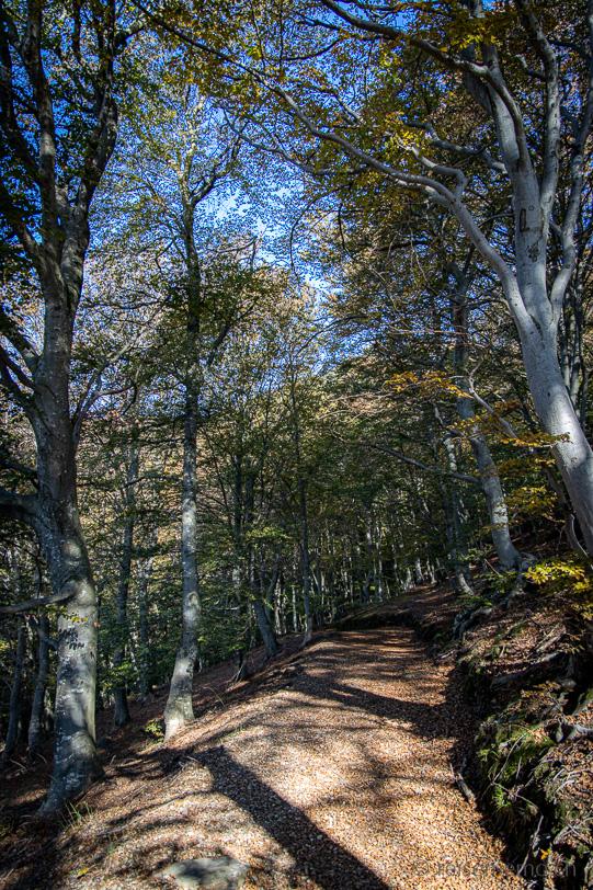 Herbstlicher Wanderweg nach Alpe Bolla