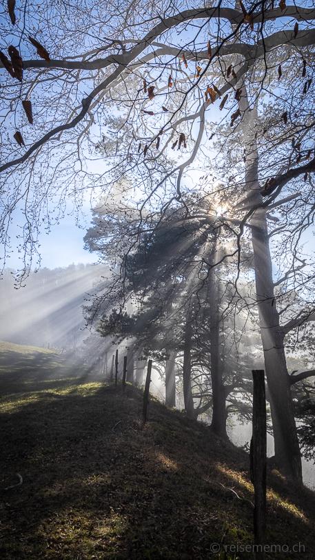 Schattenspiel auf dem Wanderweg