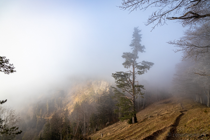 Wanderweg im Hochnebel
