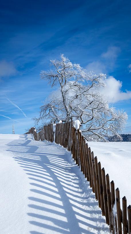 Winter im Zürcher Oberland