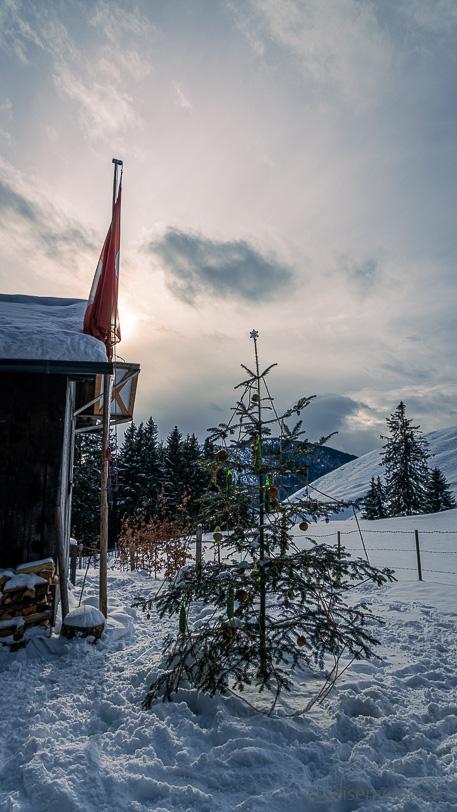 Weihnachtsbaum am Wanderweg