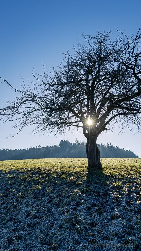Winterliche Morgensonne