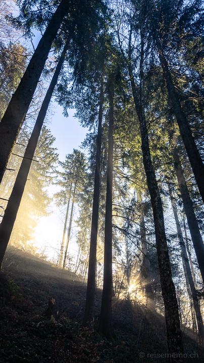 Morgensonne über dem Hochnebel im Wald
