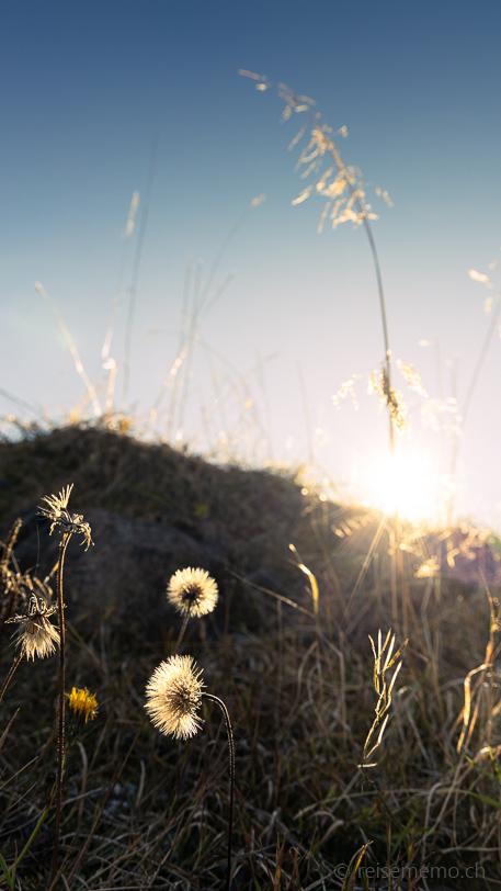 Herbstliche Abendsonne am Waldisee