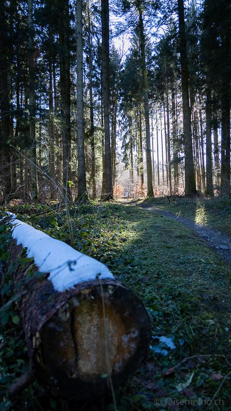 Waldpfad mit Schnee