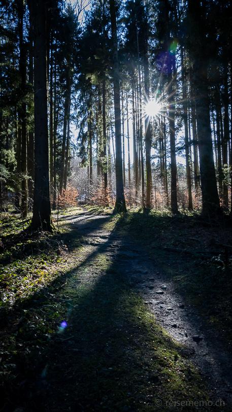 Sonniger Waldpfad