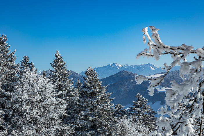 Aussicht vom Bachtel auf den Säntis im Winter