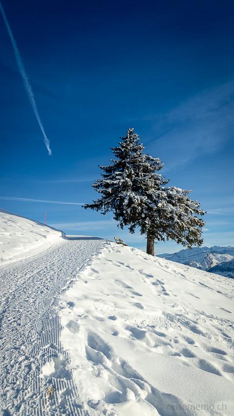 Einsame Fichte am Winterwanderweg zur Bergstation Gondelbahn Rotenflue