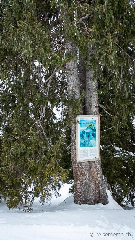 Sagenweg 8: Schutz durch die seltene Blume von der Wildenburg