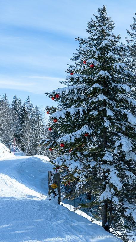 Fichtenwald und Weihnachtskugeln an Schwyzer Wanderweg