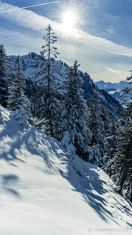 Winterlandschaft mit Fichtenwald Bergmatt bei der Holzegg