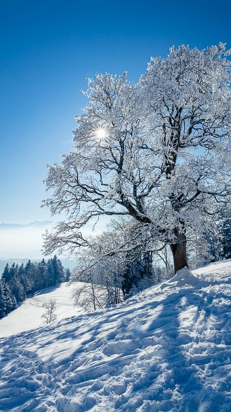 Winterlandschaft am Bachtel im Gegenlicht