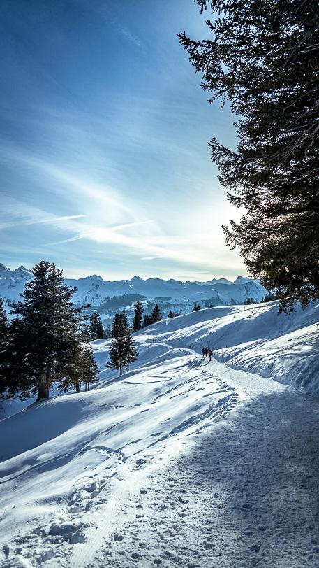 Verschneiter Winterwanderweg Alp Rotenfluh