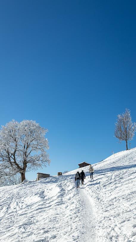 Winterwanderweg auf den Bachtel