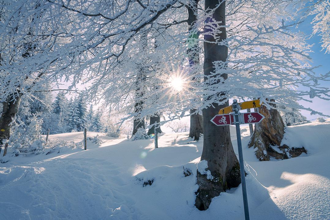 Gabelung des Rundwegs in der tiefstehenden Wintersonne