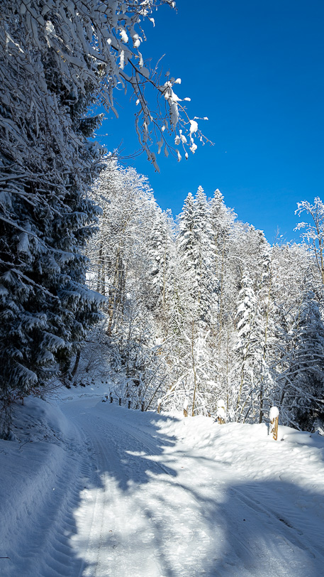 Verschneite Kurve im Waldstück