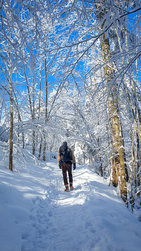 Walter im verschneiten Wald