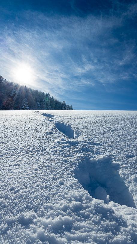 Schneespur im Tiefschnee