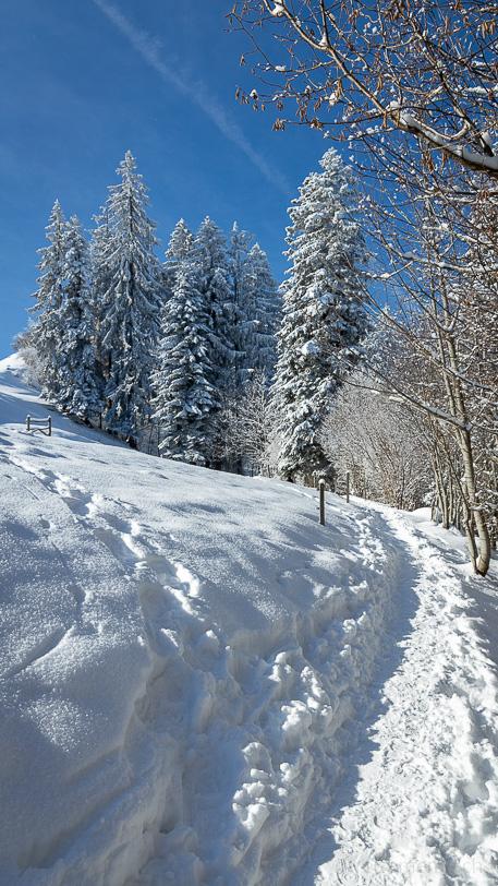 Winterwanderweg des Hulftegg Rundwegs