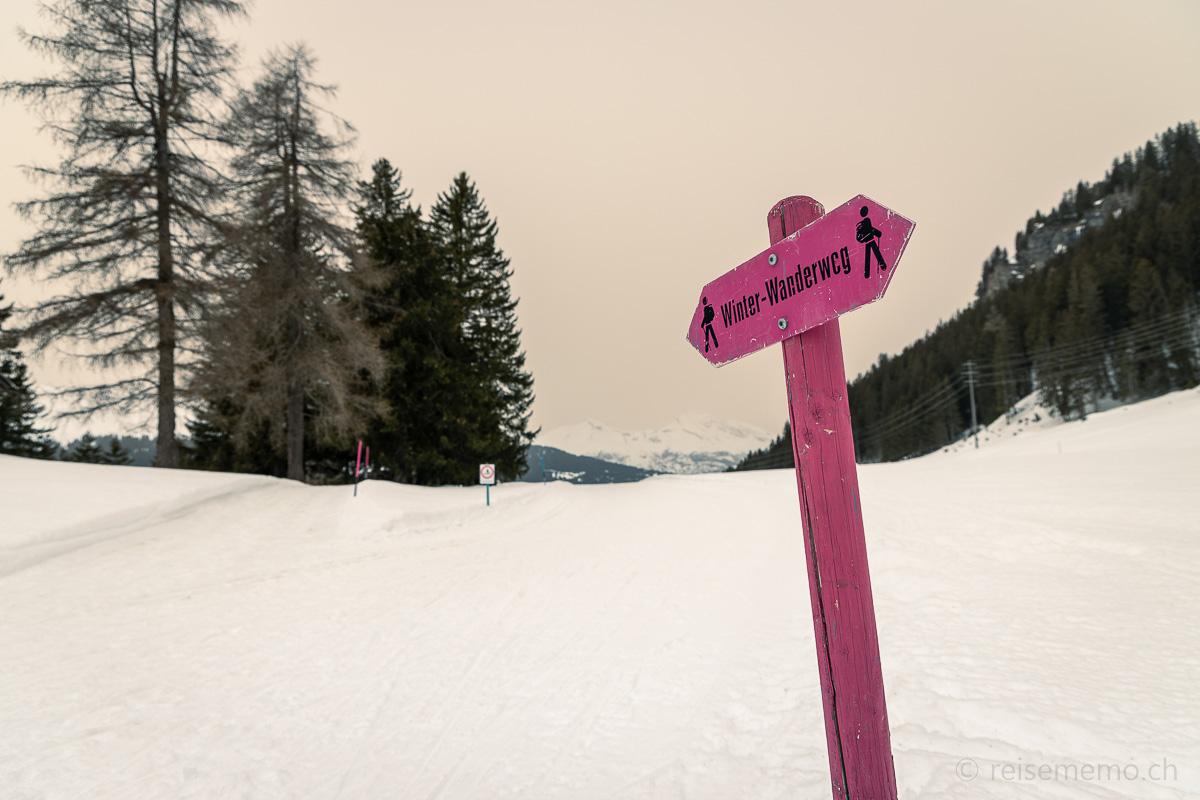 Pinker Winter-Wegweiser auf dem Parpaner Salez-Weg