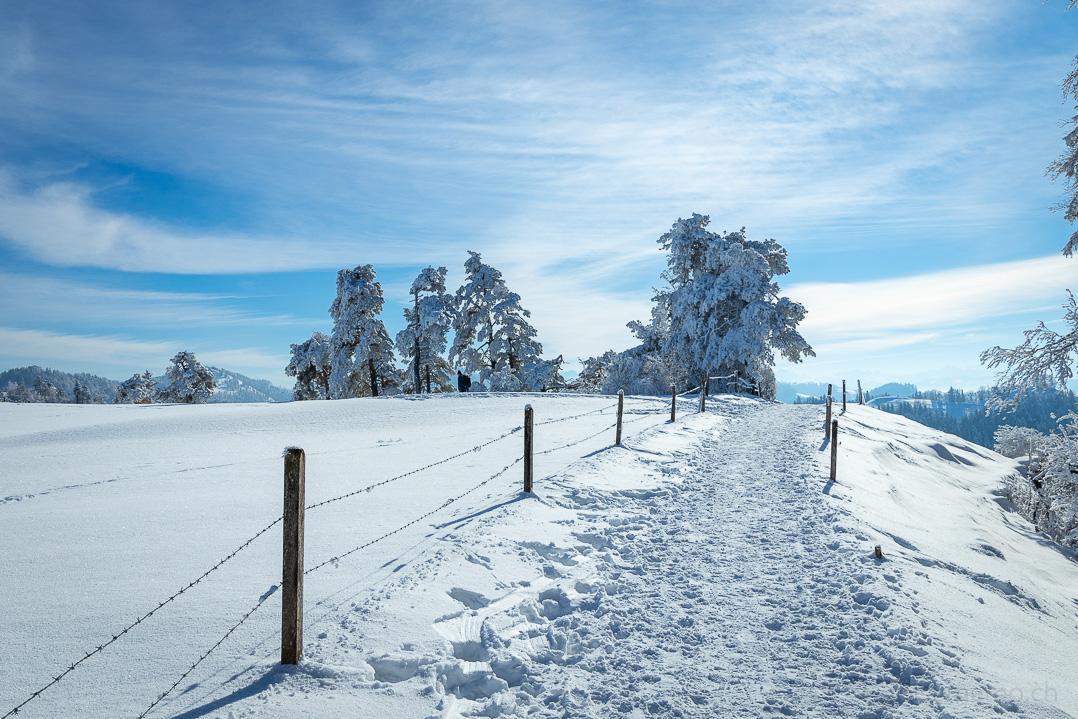 Winterwanderweg bei der Storchenegg