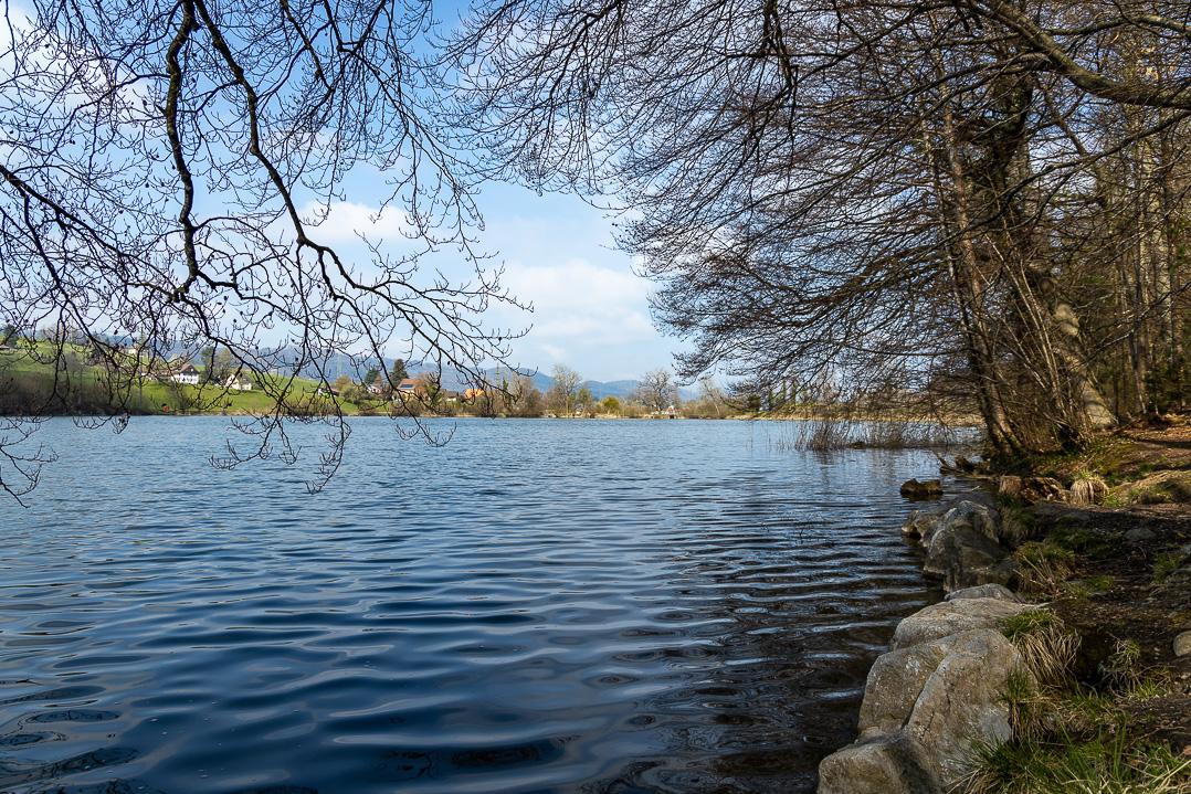 Ufer des Horgner Bergweihers
