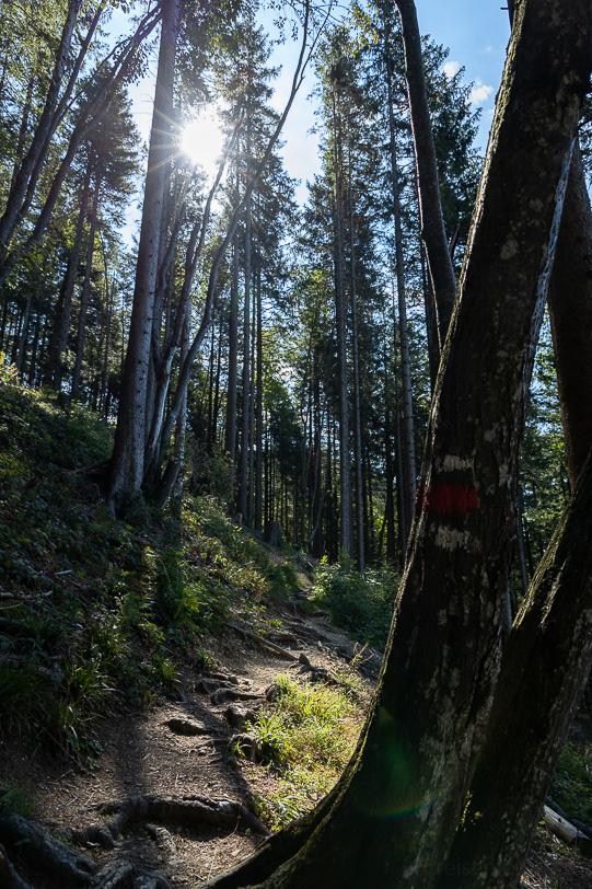 Waldstück in der Morgensonne in Richtung Hochstuckli
