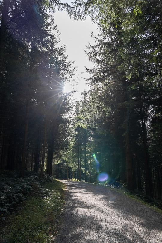 Sonniger Wanderweg im Zugerwald