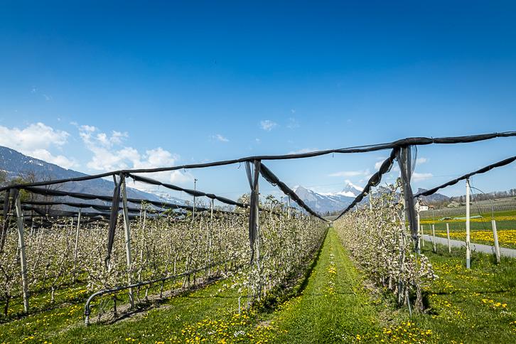 Apfelplantage Eichholz