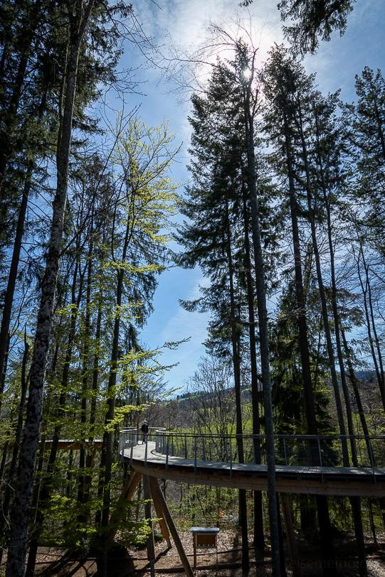 Baumwipfelpfad Neckertal bei Mogelsberg